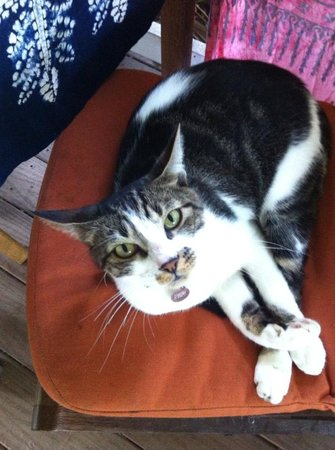 Lilikoi Inn : Optional: pet therapy