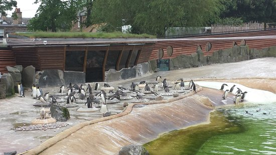 Edinburgh Zoo: Best penguin enclosure I've ever seen!