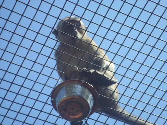 Monkey Jungle: Eating raisins