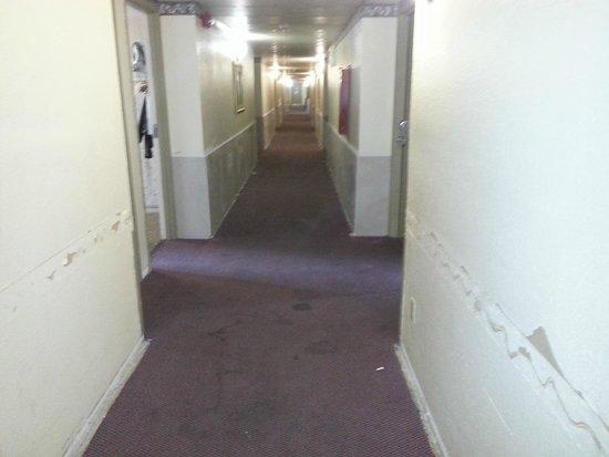 Americas Best Value Inn Missoula: hallway walls and carpet