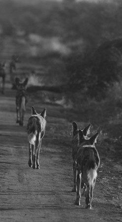 Motswiri Private Safari Lodge: On the hunt