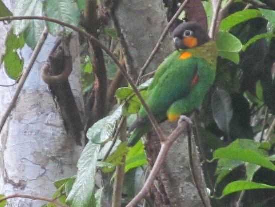 Posada Amazonas : wildlife