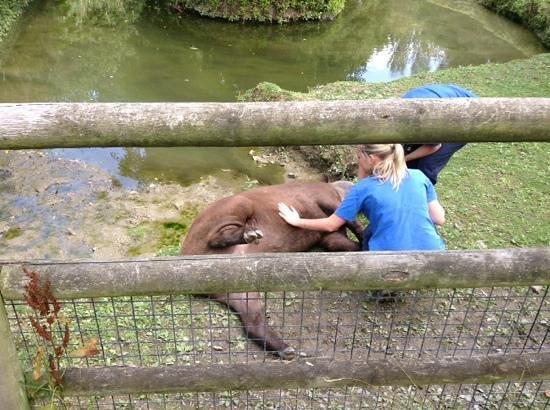 Newquay Zoo: enjoying a tummy rub!