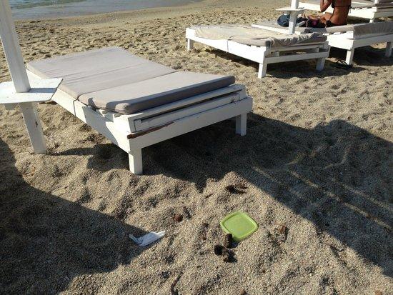 Pietra E Mare: Escrementi in spiaggia