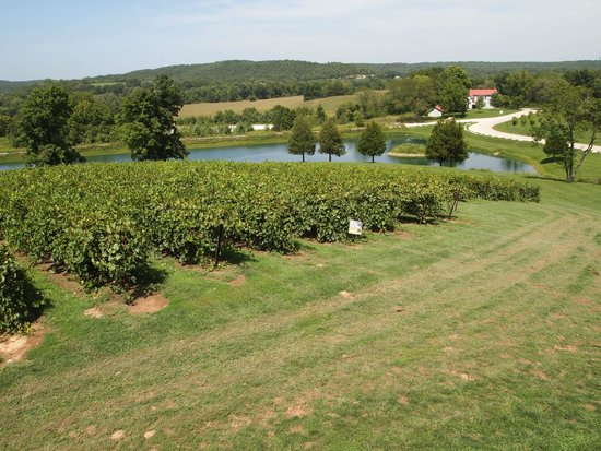 Chandler Hill Vineyards: The view from the terrace overlooking a portion of the vineyard.