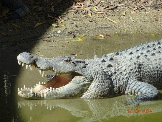 Hartley's Crocodile Adventures: Crocodile