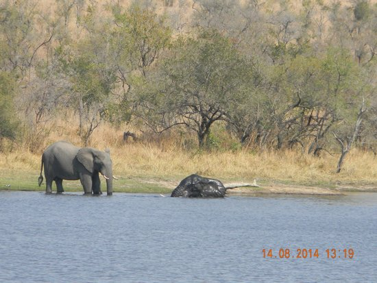 Satara Rest Camp: Elephant swiming