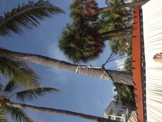 The Reach Key West, A Waldorf Astoria Resort: View from the hammock.