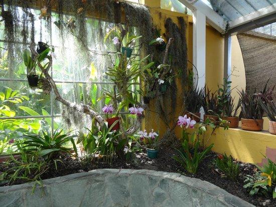 Jardin Botanico Jose Celestino Mutis - Picture of Jardin Botanico de ...