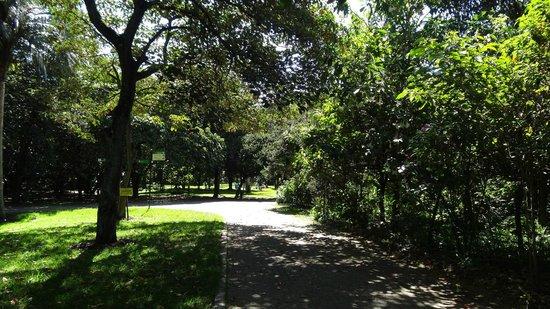Jardin Botanico Jose Celestino Mutis: fotografía de Jardín Botánico ...