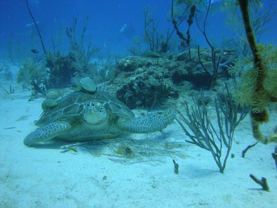 Blue Experience Diving: Say hello Mr. Turtle
