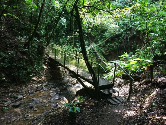 Monteverde Lodge & Gardens: bridge in the forest