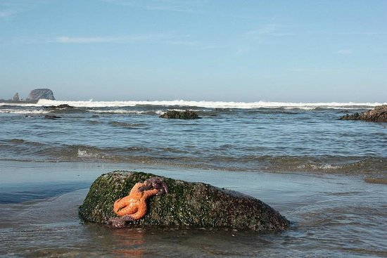 Clallam Bay, วอชิงตัน: low tide reveals endless & colorful starfish