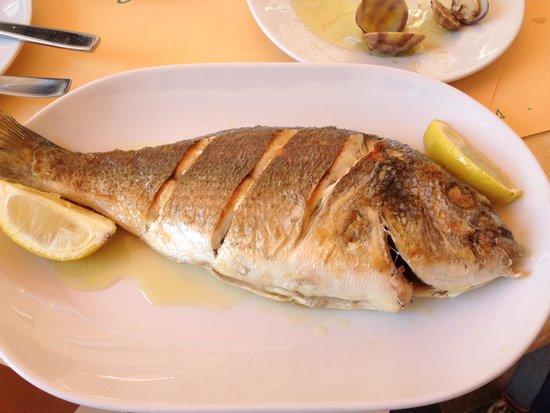El pescadito : grilled dorada fish