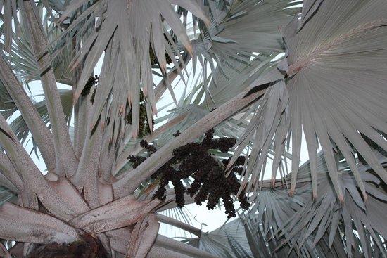 Galley Bay Resort : A Tree