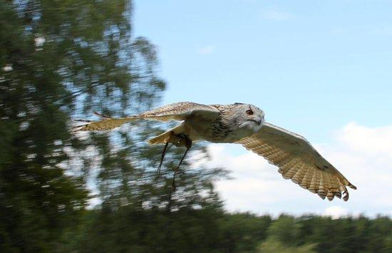 Wildpark Poing: Bird show