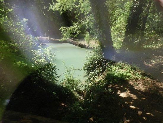 Monasterio de Piedra: Rio entre la forestacion