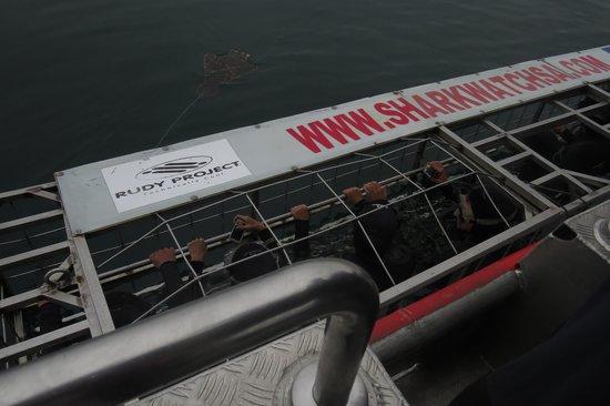 Marine Dynamics: Cage (8 people)