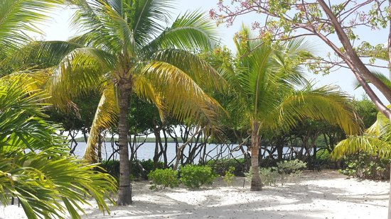 MB at Key Largo : vistas