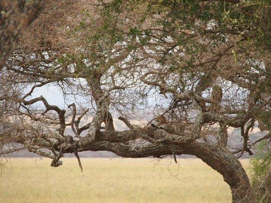 Tarangire Treetops: près du lodge