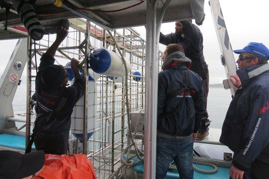 Marine Dynamics: Getting cage ready