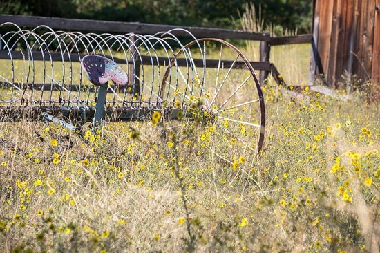 Country Willows Bed and Breakfast Inn: Field outside the Pine Ridge Suite