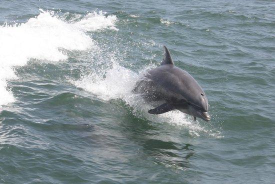 Thundercat Dolphin Watch: A beautiful sight