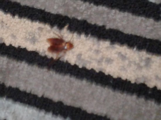 Days Inn Glendale Los Angeles : Cockroach