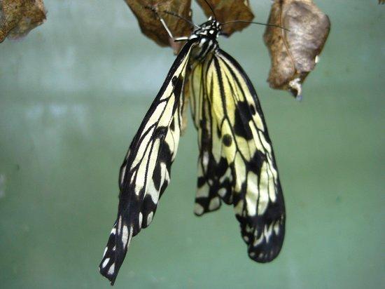 Buckfast Butterfly Farm and Dartmoor Otter Sanctuary: butterfly