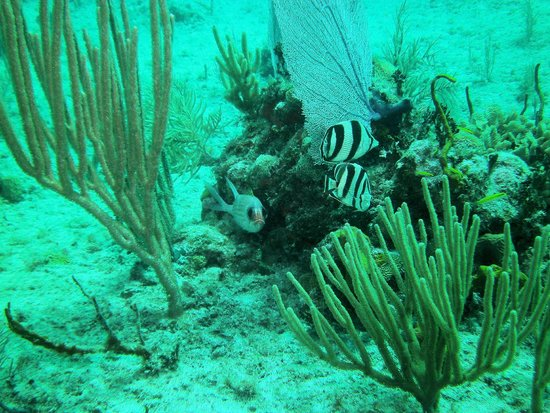 Dressel Divers: Perfect camouflage at the bottom