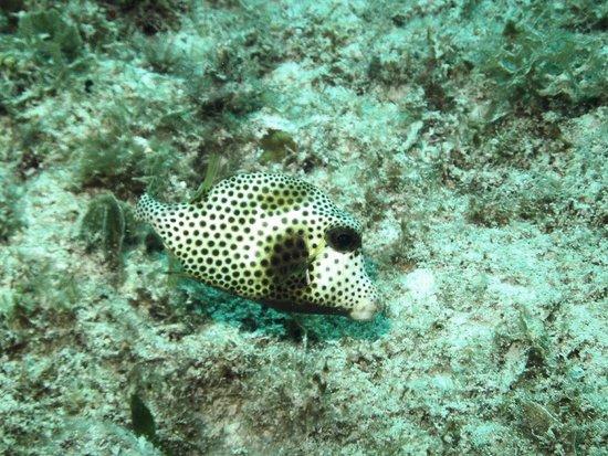 Dressel Divers: Strange fish is saluting us