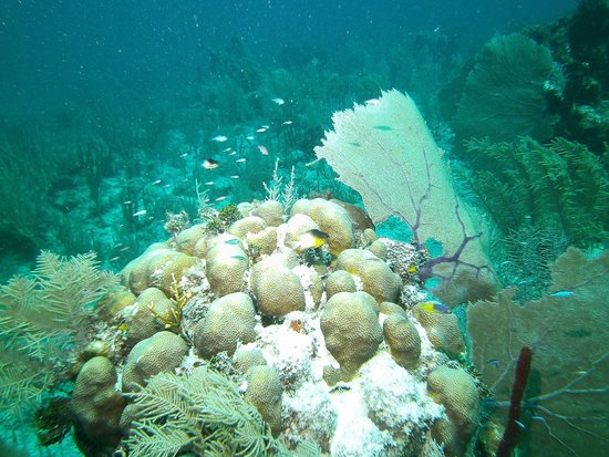 Dressel Divers: Beautiful reef is awaiting the divers
