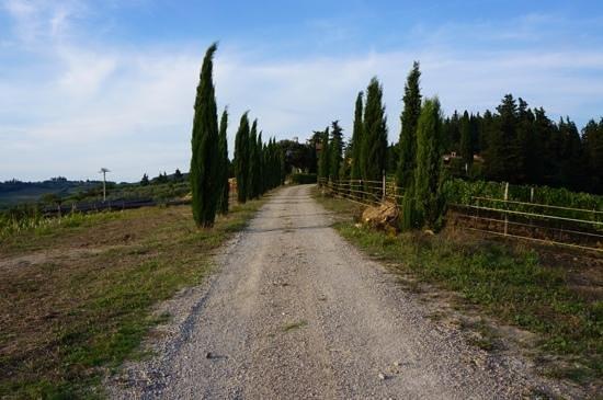 Agriturismo Podere Felceto: der bessere Teil der Zuwegung