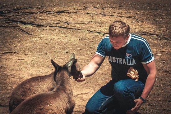 Kangaroo Island Wildlife Park: Parnada Wildlife Park