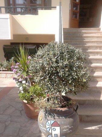 Kiriakos Apartments: Main steps to hotel