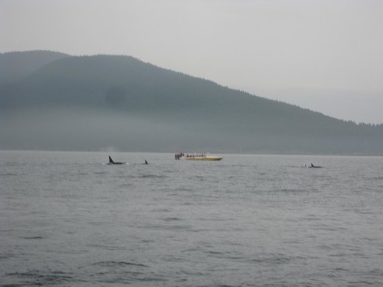 Puget Sound Express - Day Trips : Orcas in the distance