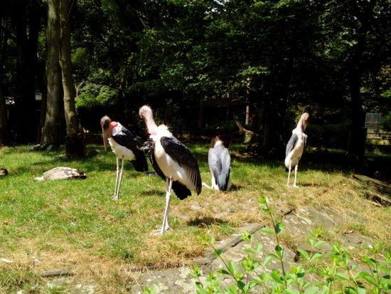 Zoo Duisburg: Duisburg Zoo, Germany