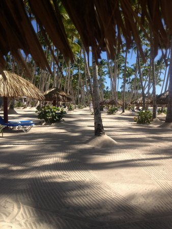 Grand Bahia Principe La Romana : The beach- don't listen to bad beach reviews!!!
