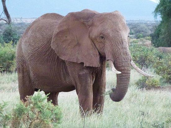 Elephant Bedroom Camp: one of many many..