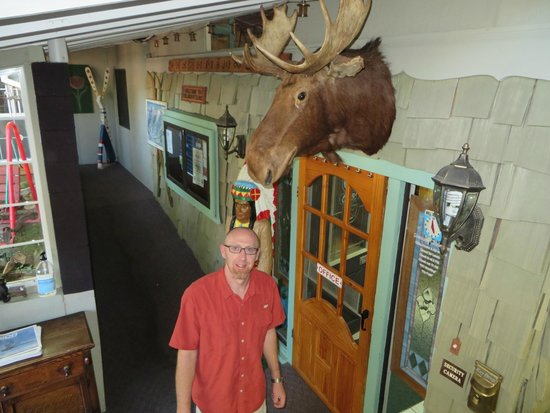 Sitzmark Chalet Inn: New moose recently acquired from a local estate sale.