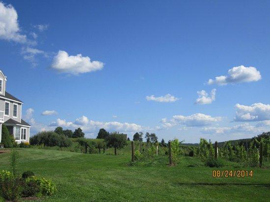 Sunset Meadow Vineyards: Vineyards