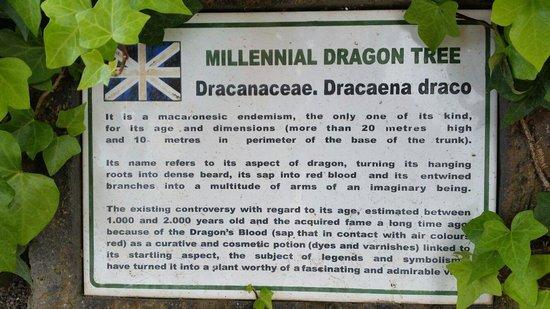 Parque del Drago: Information