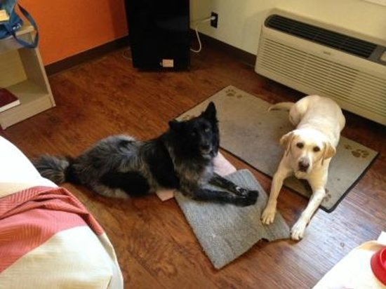 Motel 6 Wichita East: My two dogs in the room. The linoleum floors are a great idea if you're worried about messes.