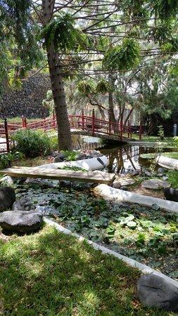 Foto de jard n acu tico puerto de la cruz entrada a la for Jardin acuatico