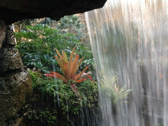 Gaylord Opryland Resort & Convention Center : Waterfall and gardens