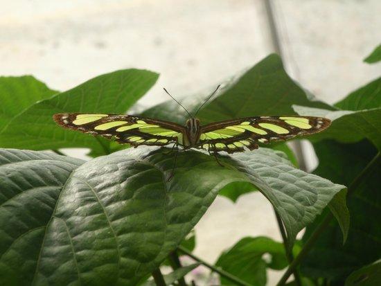 Anaconda Lodge Ecuador: Esto solo se ve alla...las mariposas nos modelan para las fotos.