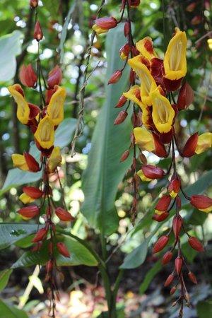 The Summit Gardens Vanuatu: The gardens
