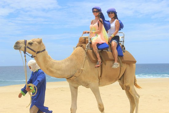 Cabo Adventures: Riding the camel by the beach with my mom!