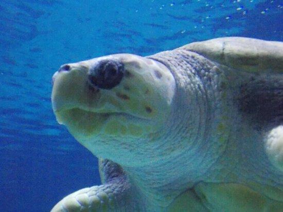 Adventure Aquarium: Turtle, dude!