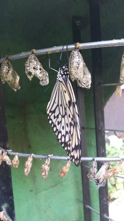 Entopia: Butterfly just chillin' after coming out of its chrysalis.